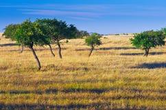 Autumn grassland. Sparse trees with blue sky on grassland stock photos