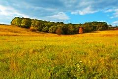 Autumn grassland Stock Image