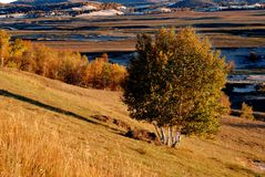 Autumn grassland in morning Stock Photography