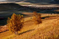 Autumn grassland in morning Stock Photo