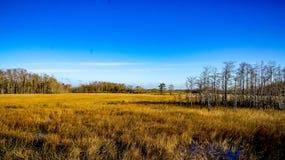 winter in the wetlands Stock Photo