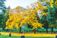 Autumn in grave yard,National Cemetery with a flag on Memorial day in Washington,Usa. Stock Images