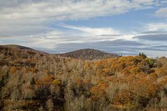 Autumn, Graveyard Fields Area. Blue Ridge Parkway, NC royalty free stock images