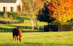 Autumn Grazing auf der Ranch stockfotografie