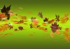 Autumn Green. Golden Autumn Leaves on green background Stock Images