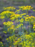 In the autumn green garden stock photography
