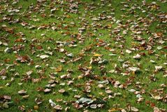 Autumn on green grass Royalty Free Stock Images