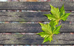 Free Autumn Green Leaf Over Wooden Bench With Copy Space Stock Photo - 85987990