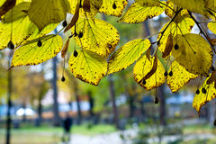 Autumn, green and leaf in the park Royalty Free Stock Photography