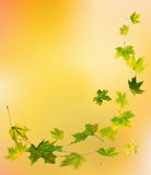 Autumn green leaves falling Stock Image