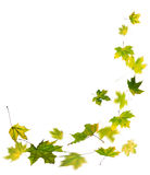 Autumn green leaves falling Royalty Free Stock Images