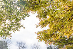 Autumn green maple leaves in sunny day background Stock Photo