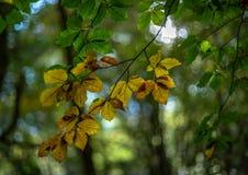 Autumn - green into orange royalty free stock photos