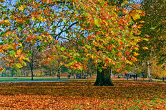 Autumn in Green Park, London royalty free stock photos