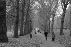 Autumn in Green park in London royalty free stock photos