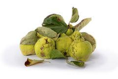 Autumn green quince. White background. royalty free stock photo