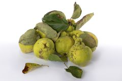 Autumn green quince. White background. royalty free stock photography