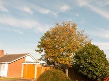 Autumn green tree in the blue sky background in suburbs. Essex; England; UK Royalty Free Stock Image