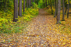 Autumn green-yellow-red forest Stock Photography