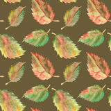 Autumn green yellow red leaves seamless pattern texture background Stock Images