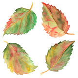 Autumn green yellow red leaves set isolated Stock Photography
