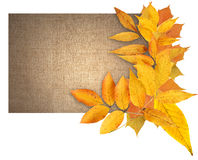 Autumn Greeting Card Royalty Free Stock Photos