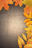 Autumn Greeting Card Stock Photography