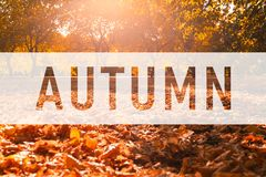 Autumn, greeting text on colorful fall leaves royalty free stock photo