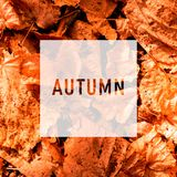 Autumn, greeting text on colorful fall leaves background. Word Autumn with colorful leaves stock photo