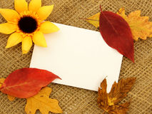 Autumn greetings Royalty Free Stock Images