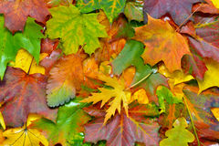 Autumn greetings. Image was taken on October 2012 Stock Image