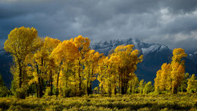 Autumn in the Gros Ventre River Valley Royalty Free Stock Images