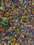 Autumn Ground Fotografie Stock