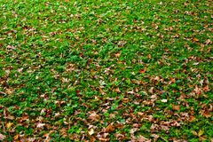 Autumn ground Stock Image