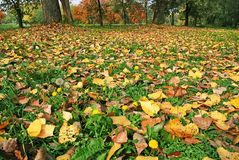 Autumn Ground Royalty Free Stock Photography
