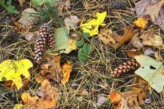 Autumn Ground Fotografia Stock