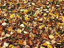 Autumn ground. Cover of leaves on the ground in autumn Stock Photography