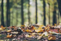 Autumn Ground Fotografia Stock Libera da Diritti