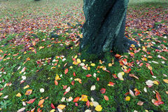 Autumn ground colors Royalty Free Stock Image