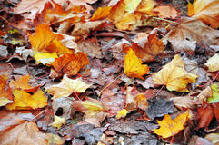 Autumn ground foliage Stock Photo