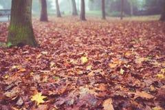 Autumn ground leaves retro Stock Photography