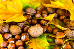 Autumn ground Royalty Free Stock Images