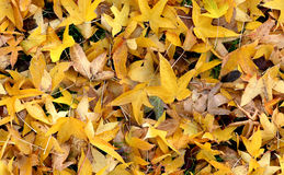 Autumn Groundcovering (Seamless). Seamless autumn groundcovering with yellow leaves. Use as background or texture Stock Photos