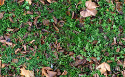 Autumn Groundcovering (Seamless) royalty free stock photo