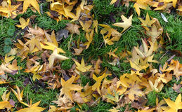 Autumn Groundcovering (Seamless) Royalty Free Stock Images