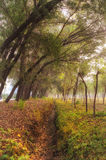Autumn grove Royalty Free Stock Images