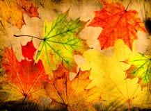 Autumn grunge background Royalty Free Stock Photos