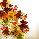Autumn grunge background with mapple leafs Stock Photos