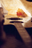 Autumn guitar consert. Guitar and autumn leaf after consert royalty free stock photos