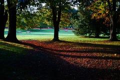 Autumn in Hagley Park, Christchurch, New Zealand Royalty Free Stock Photos
